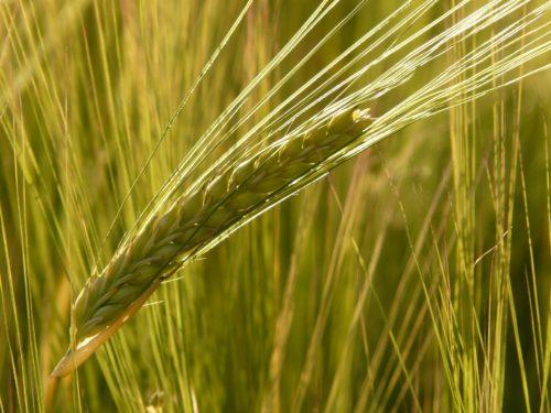 Garanzia Compresa Agricoltura: un nuovo sostegno al settore dell'agricoltura toscana